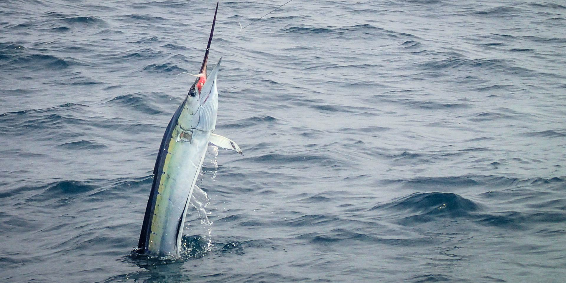 fly-fishing-rompin-sailfish-dron_150823_2001_1920