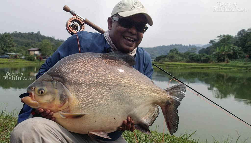 Crazy Big Pacu, on Fly!