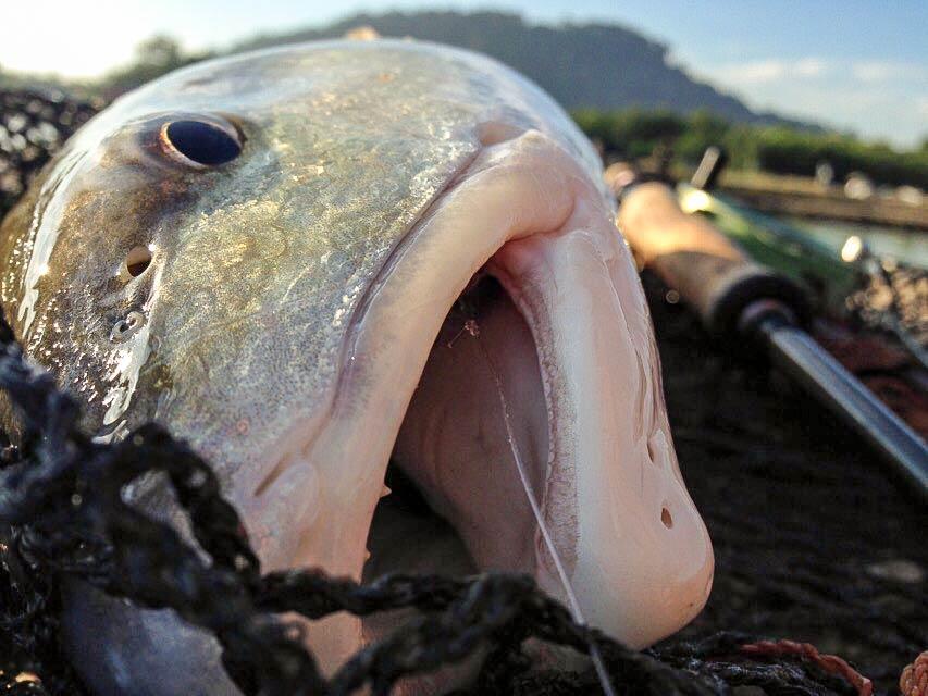 redfish-fishing-pond-malaysia