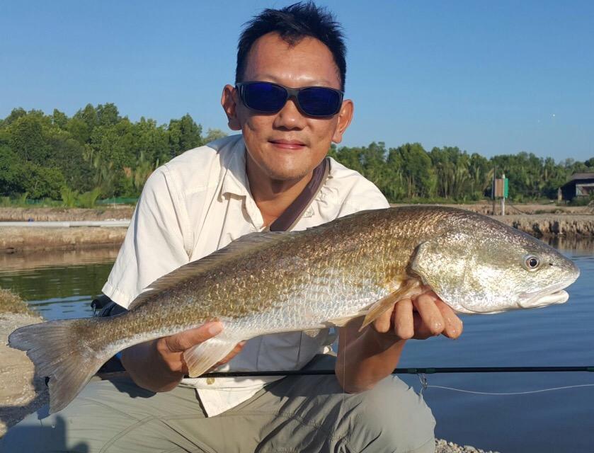 redfish-fly-fishing-jugra-malaysia