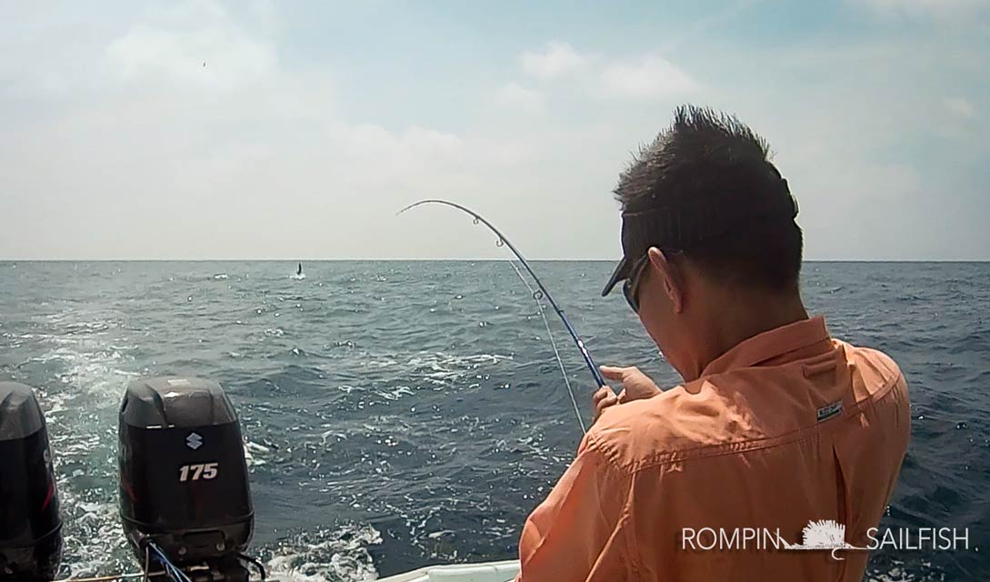 rompin-sailfish-fly-fishing-ben-20151229