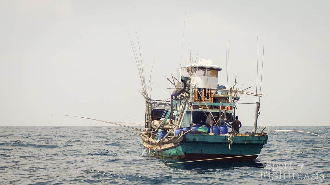 Squid season means sailfish and predators and also squid fishing boats - note the number of fishing poles