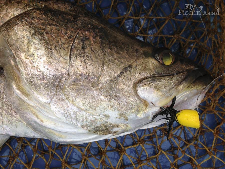 barramundi-popper-fly-sw-jurassic-fishing-pond-sepang-malaysia-Juan-Wei-20160428-(15)