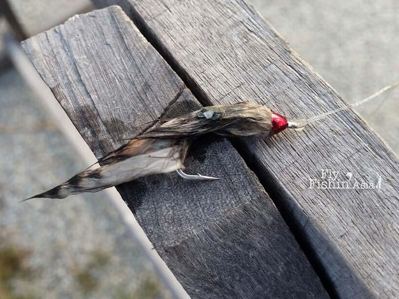 flies-sw-jurassic-fishing-pond-sepang-malaysia-Juan-Wei-20160428-(9)