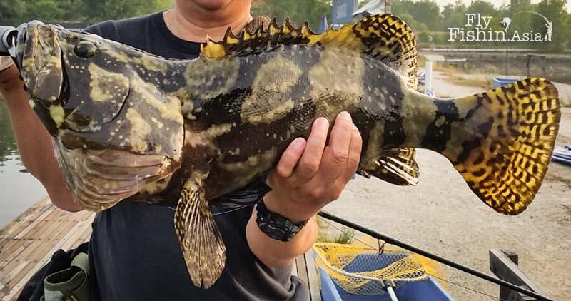 grouper-fly-fishing-sw-jurassic-fishing-pond-sepang-malaysia-Juan-Wei-20160428-(10)