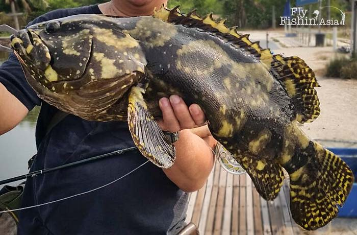 grouper-sw-jurassic-fishing-pond-sepang-malaysia-Juan-Wei-20160428-(4)