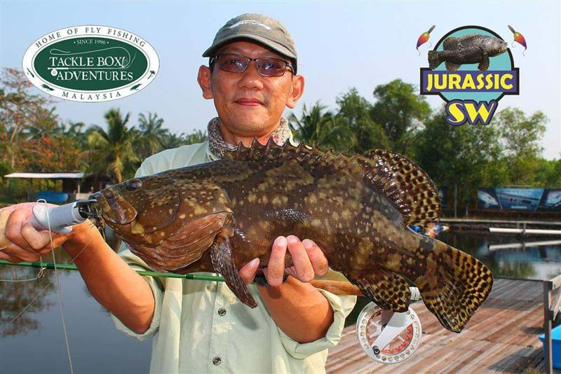 Grouper Galore – SW Jurassic Fishing Pond