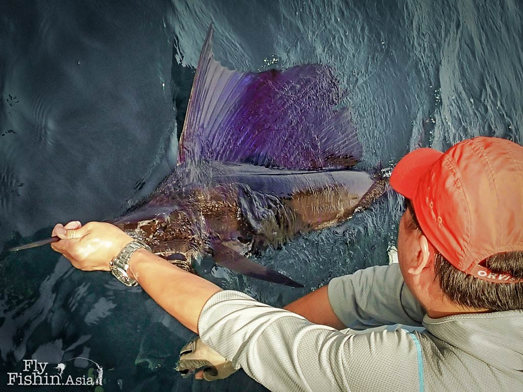 Sek and his Rompin Sailfish on Fly – Video