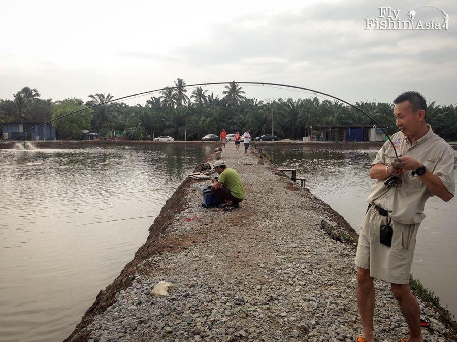 fly-fishing-jugra-pond-banting-malaysia-20140710-(1)-wirianto