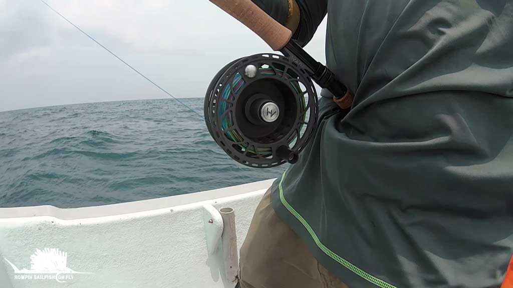 Video: Fly fishing in Rompin – free swimming sailfish