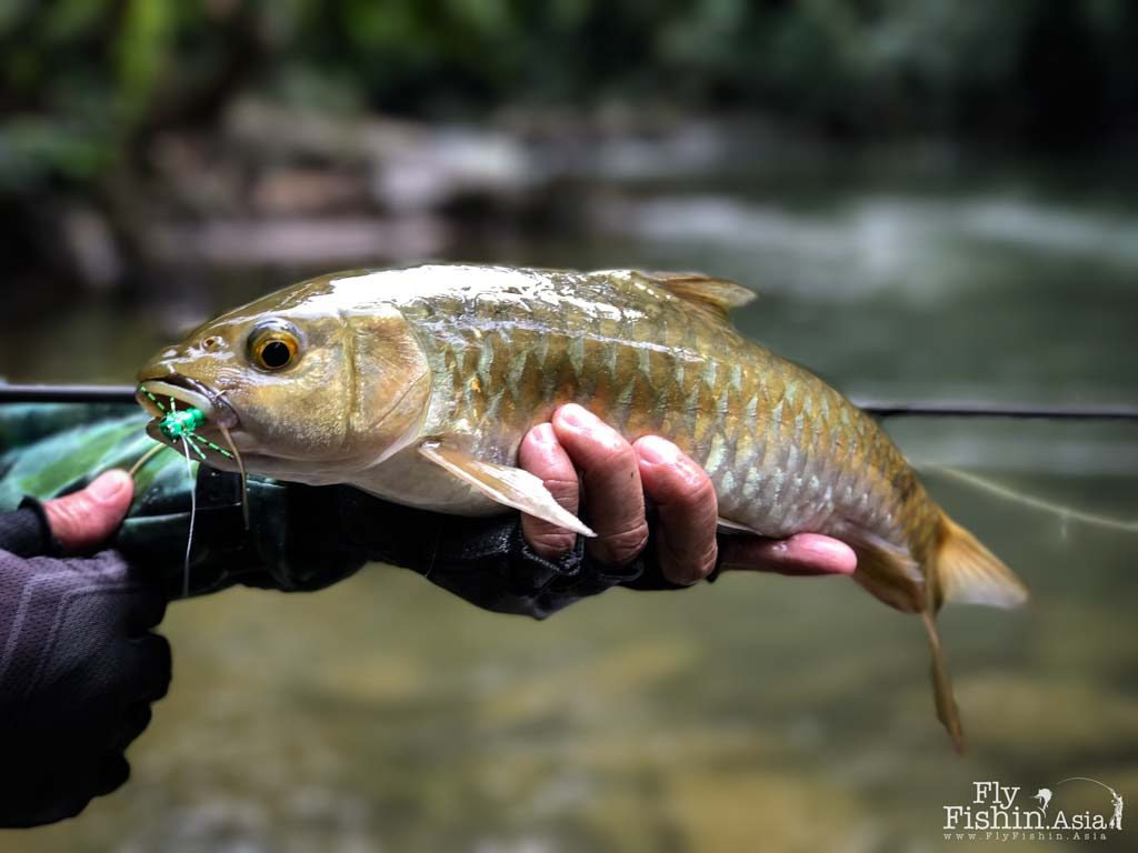 High Season High Water – Fly Fishing in Khao Sok