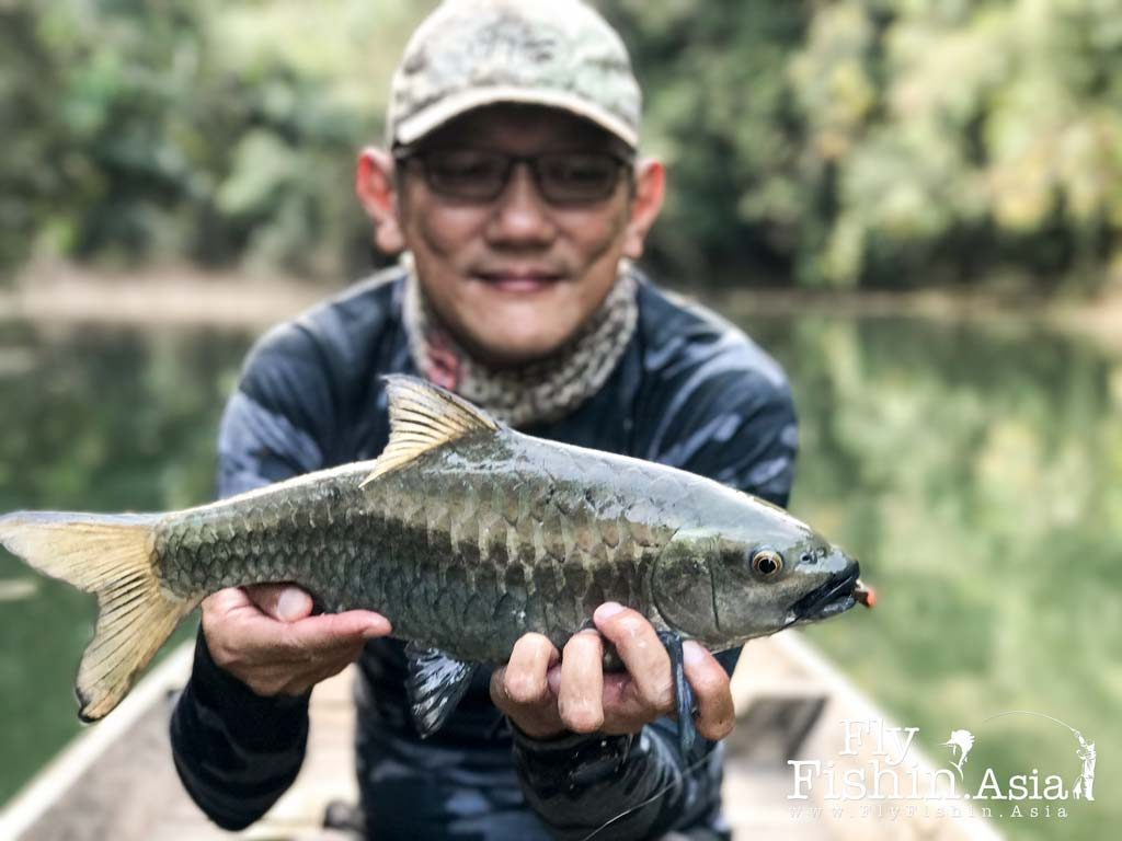 Fly Fishing Thai Mahseer Chiew Lan Lake – February Trip Teaser Video
