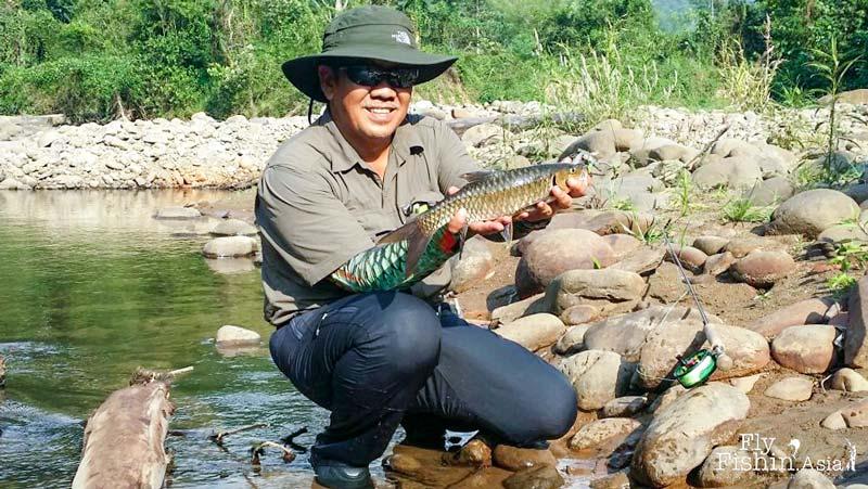 Mahseer, or pelian, on a green hopper