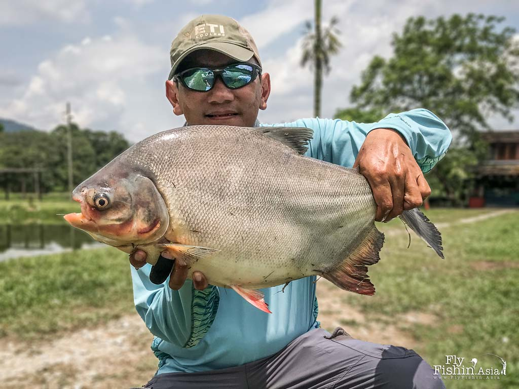 Smaller pacu by Juan