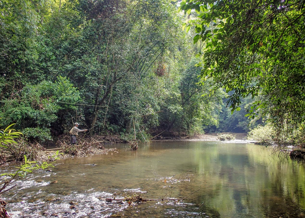 fly fishing in a beautiful tropical rainforest river