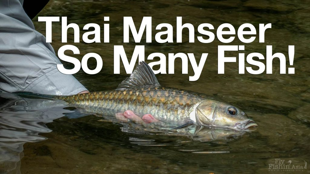 Thai Mahseer fly fishing David