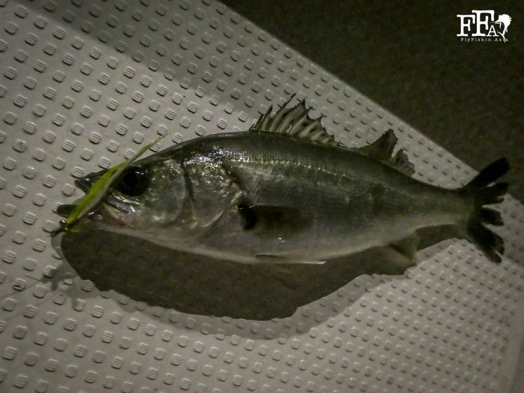 Closer look at a seabass
