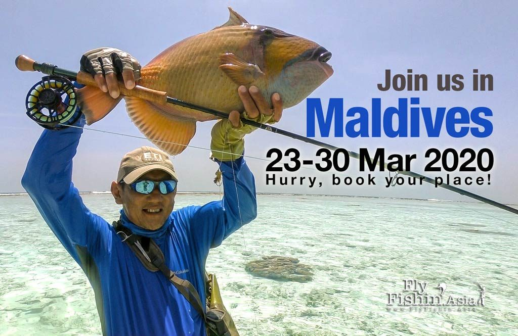 fly fishing in Maldives March 2020