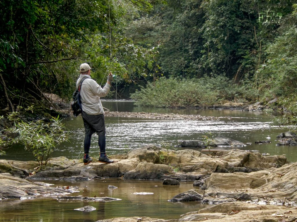 Fly fishing in the tropical rainforest presents a lot of challenges